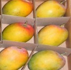 Corrugated Box of Devgad-Ratnagiri Mangoes