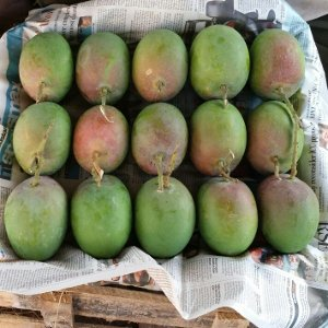 Wooden Box of Devgad-Ratnagiri Mangoes