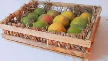 Quarter Wooden Box of Devgad-Ratnagiri Hapoos Alphonso Mangoes